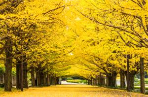 歌を作るなら秋の歌がよい、という話【マーケティング的に】